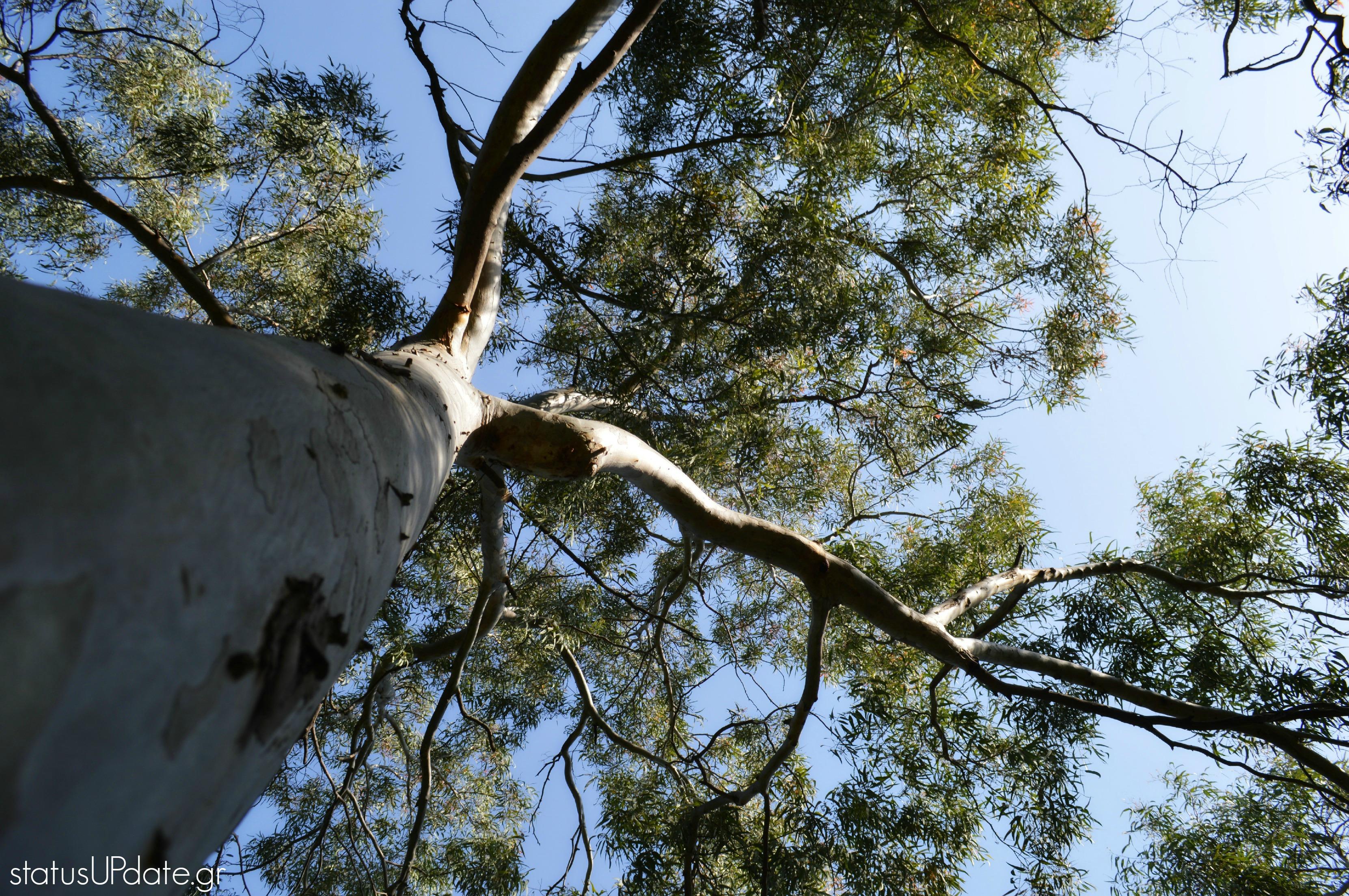 alsos status tree