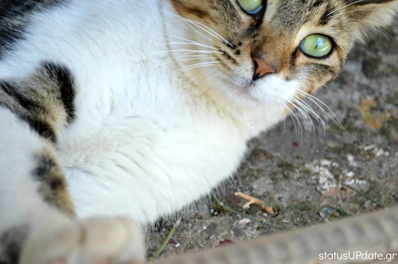 cat statusupdate2