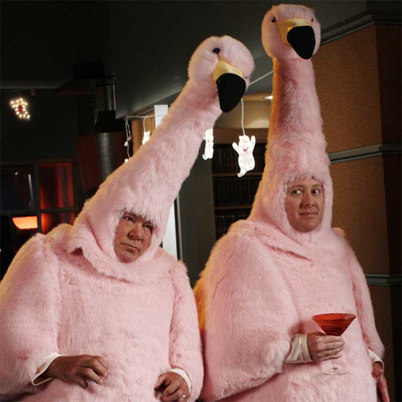 Boston-Legal Flamingos